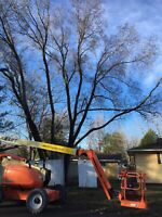 TREE REMOVAL, LANDSCAPING AND EXCAVATION