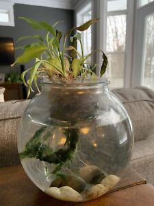 Bowl for Beta Fish with Plant