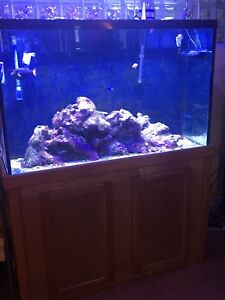 110 Gallon Reef Aquarium