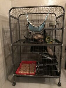 2 Fun Ferrets and Cage