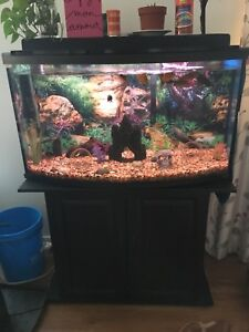 Aquarium 45 gallon