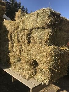 Small Square greenfeed Hay Bales