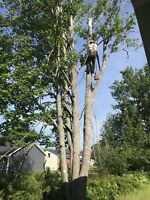 Tree & Limb Removal & Wood & Brush Chipping Insured Free Quotes