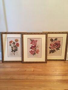 Botanical Frames Prints