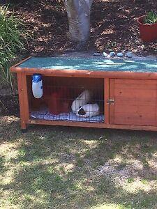 Guinea pig - complete pet setup Hillarys Joondalup Area Preview