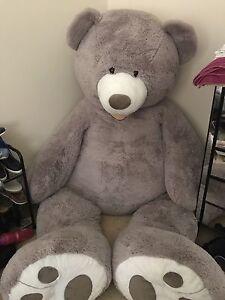 Giant Teddy Bear Cornubia Logan Area Preview