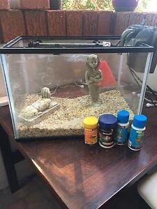 Fish Tank medium size Randwick Eastern Suburbs Preview