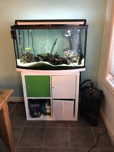 45 Gallon Bowfront and Malawi Cichlids