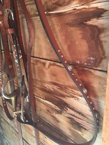 Beautiful western bridles and saddle pad.