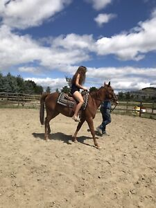 Horse Boarding | Kijiji in Vernon  - Buy, Sell & Save with Canada's