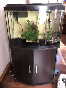 36 gallon bowfront and tons of extras