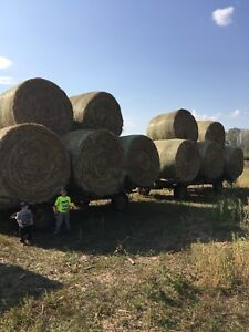 Oat Greenfeed Bales