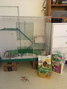 Female rats, food and new cage