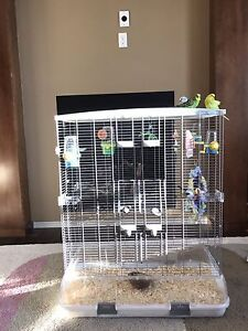 Big cage + 3 budgies