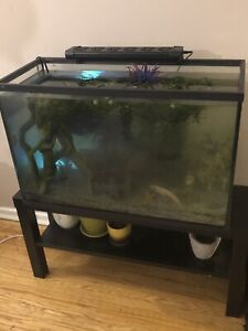 40 gallon with sand set up