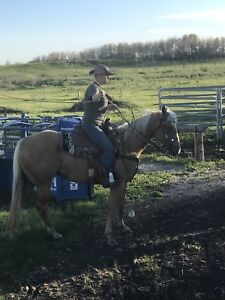 5 year old registered mare