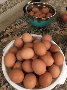 Family raised chicken eggs for sale!$5/dozen