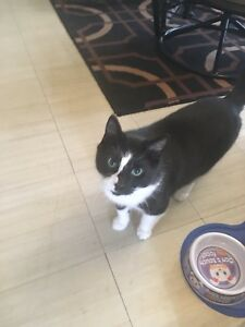 8 year old cat