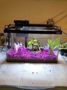 Fish tank w all accessories