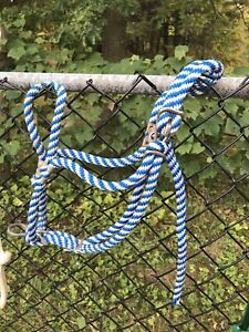 Rope halter and leads