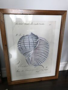 Rustic Shabby Chic Seashell Picture