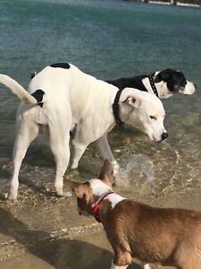 Dog walking, Pet sitter/minder - 1st one Free