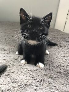 Female kitten ready for a home