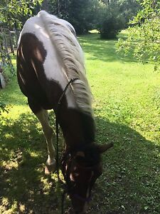 Looking to buy a saddle