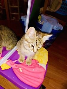 Cat for a good home Amherst NS