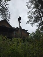 Tree & Limb Removal Services Fully Insured Free Quotes