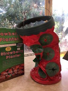 Strawberry planter Baldivis Rockingham Area Preview