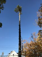 Tree & Limb Removal & Chipping Services Insured Free Quotes