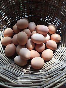 Selling Organic Fresh Eggs Dallas Hume Area Preview