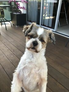 Lost Dog Thornlands Redland Area Preview