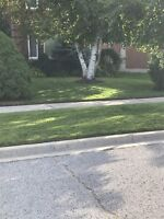 Sweet prices lawn care & snow removal $40/fall clean up/
