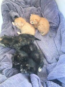 5 Coloured kittens