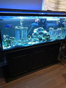 Huge 5 feet long tank 110 gallons with some fish
