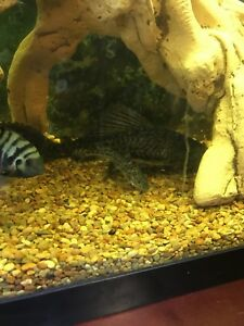 Fish and aquariums for sale