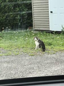FOUND cat- Gatineau
