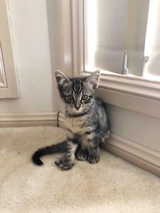 Achi 😻 adopt me! Desexed, vaccinated & microchipped ✅