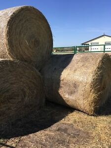 Large round hay bales for sale horse feed