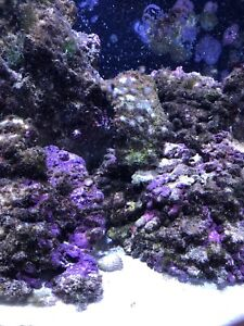 Live rock for saltwater tank