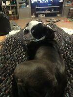 Dog/house sitter