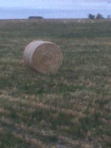 Barley Greenfeed