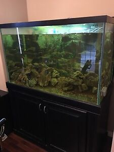 150 gallon mint tank, cabinet and Eheim 2 professional filter