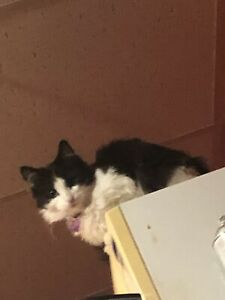 1 year old black and white cat for re homing