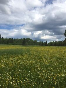 13 acres in Oliver paipoonge twp