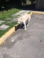 Dog seen in barrhaven