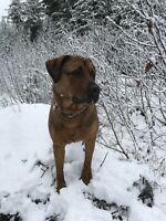 Dog needs a ride to Regina from Hope