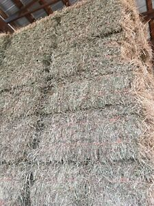 Mature first cut shedded square bales